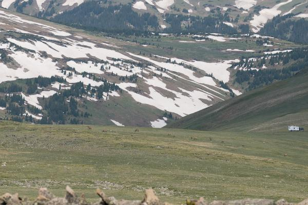 Elk on the tundra (Rocky Mountain NP, Colorado)